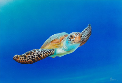 Sea Turtle in Flight-small