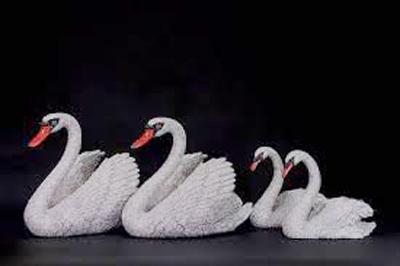 Swan Family-portfolio